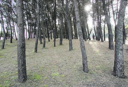 Emplazamiento de fosas comunes en la comarca de Avilés: el Pinar de Salinas